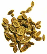 Ajowan Seed Essential Oil Information
