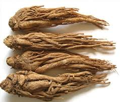 Angelica Root Essential Oil Information