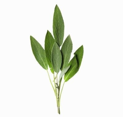 Dalmatian Sage Essential Oil