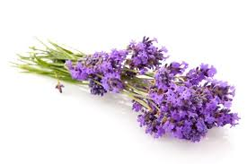 types of essential oils used in aromatherapy