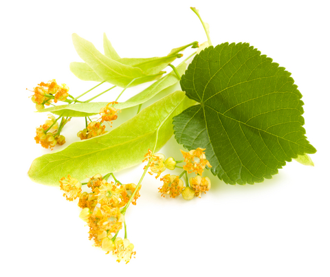 Linden Blossom Essential Oil