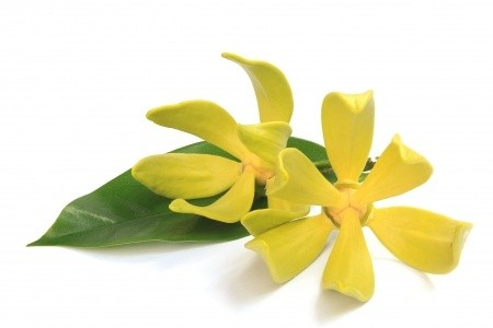 ylang ylang essential oil benefits for hair