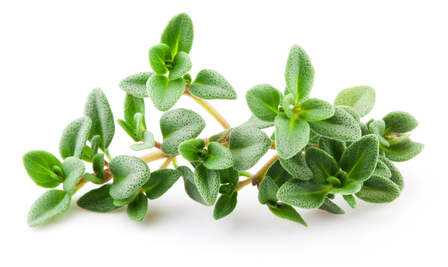 white thyme oil for hair growth